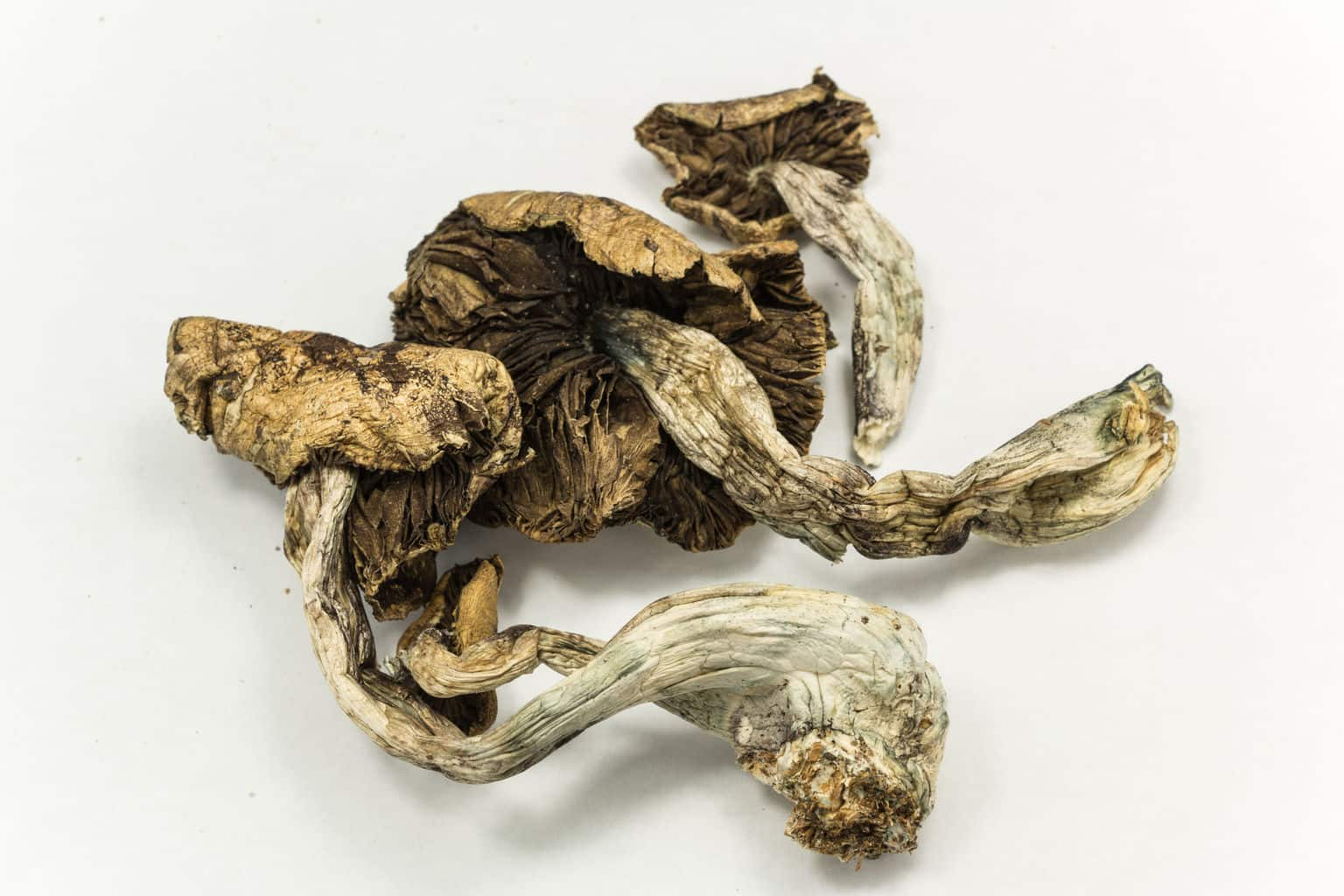 Magic mushrooms may treat anxiety and depression