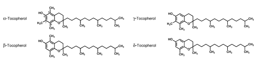 four subtypes of Vitamin E (alpha-tocopherol, beta-tocopherol, gamma-tocopherol, delta-tocopherol)