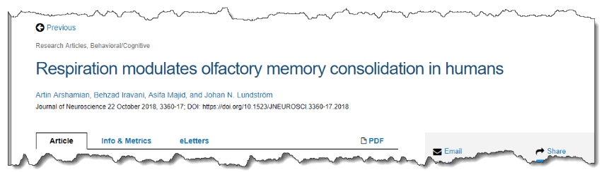 Respiration modulates olfactory memory consolidation in humans