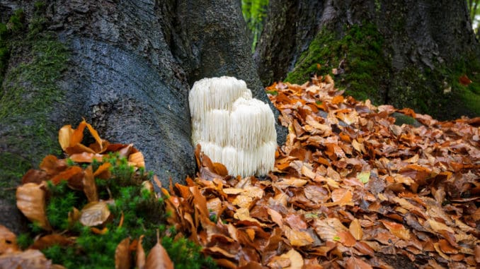 New Research Shows This Mushroom Protects Men Against Alzheimer's