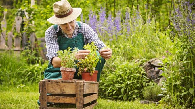 Man planting herbs in a garden