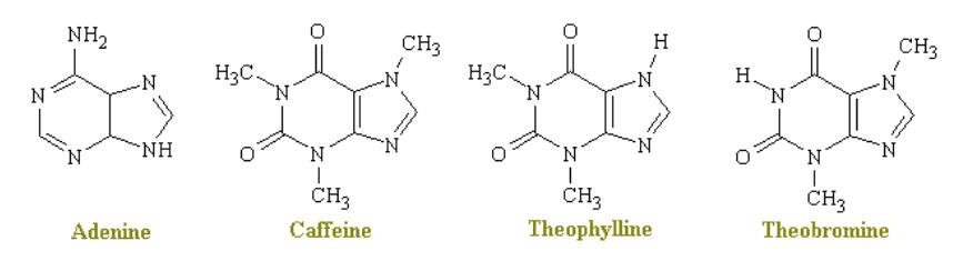 Adenine. Caffeine. Theophylline. Theobromine