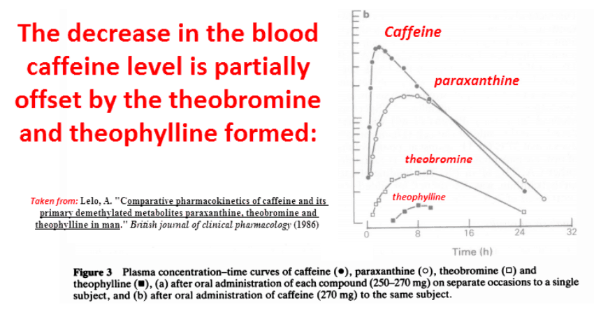 The decrease in the blood caffeine level is partially offset by the theobromine and theophylline formed