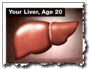 Your liver, Age 20
