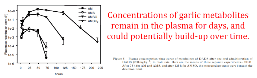 Concentrations of garlic metabolites remain in the plasma for days, and could potentially build-up over time.