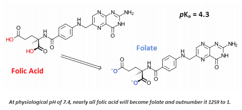At physiological pH of 7.4, nearly all folic acid will become folate and outnumber it 1259 to 1