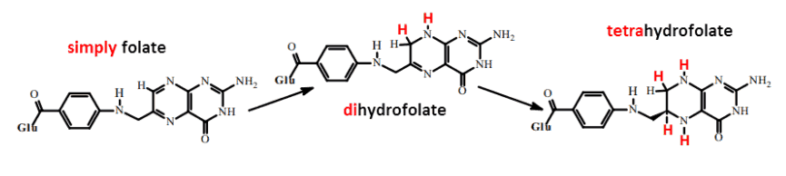 distinction between folate, dihydrofolate, and tetrahydrofolate