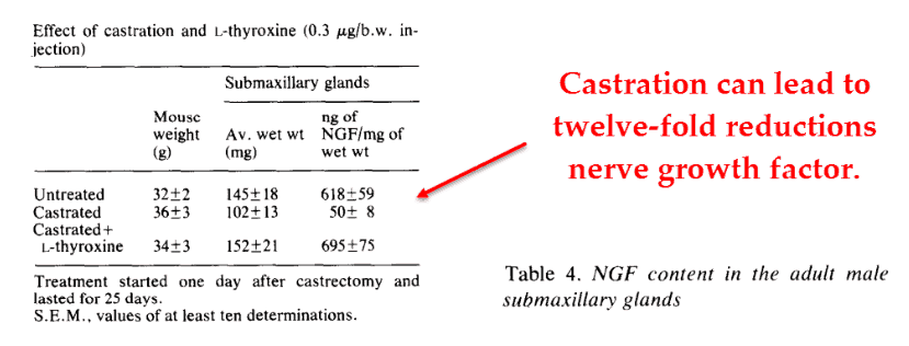 Castration can lead to twelve-fold reductions nerve growth factor
