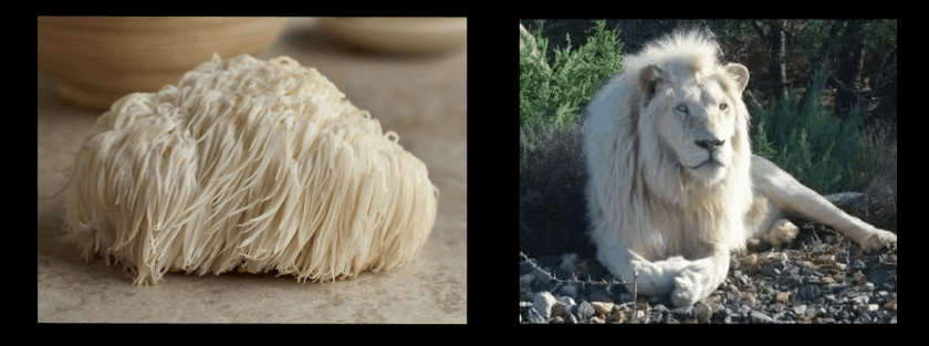 "The mushroom actually looks a bit more like a Komondor dog – the ""Hungarian sheepdog."