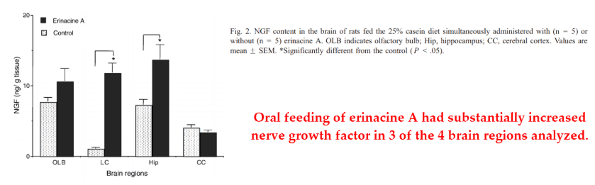 Oral feeding of erinacine A had substantially increased nerve growth factor in 3 of the 4 brain regions analyzed