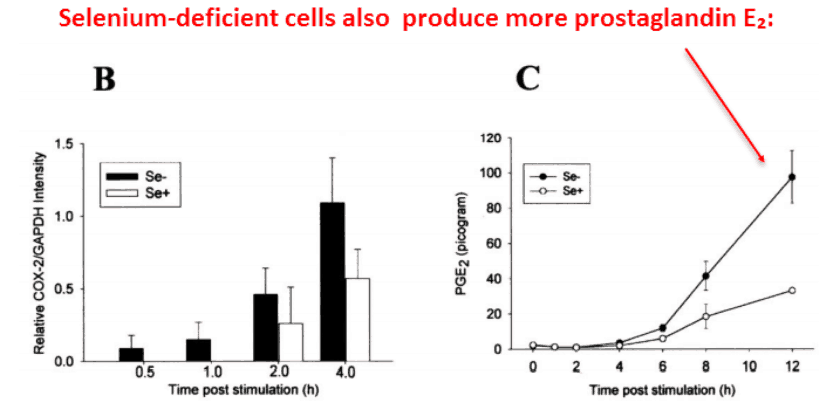 Selenium-deficient cells also produce more prostaglandin E2