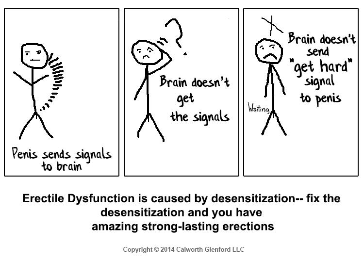 Erectile dysfunction is caused by desensitazation
