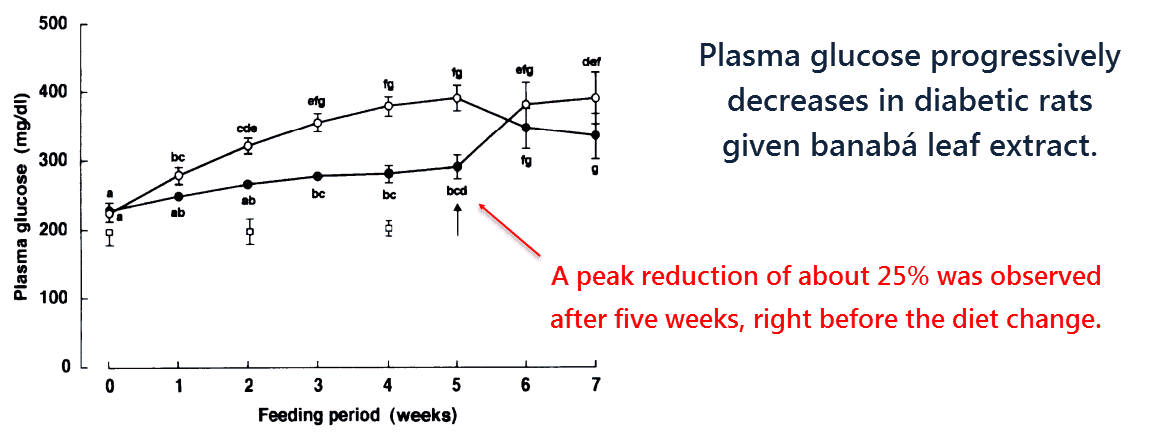 Plasma glucose progressively decreases in diabetic rats given banaba leaf extract.
