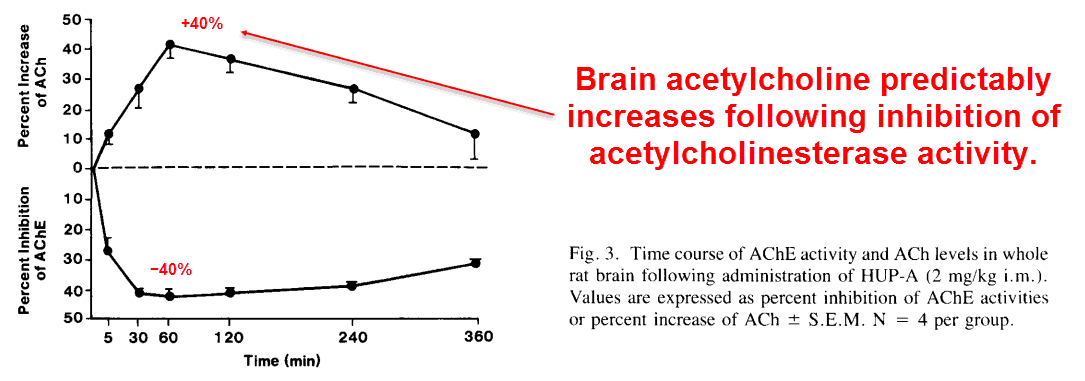 Brain acetylcholine predictably increases following inhibition of acetylcholinesterase activity.