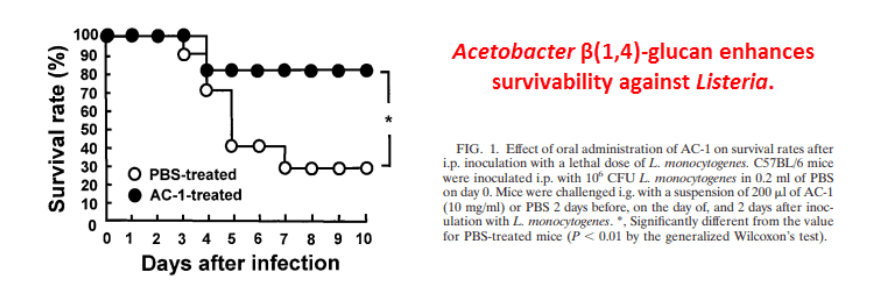 Acetobacter β(1➝4)-glucan enhances survivability against Listeria.