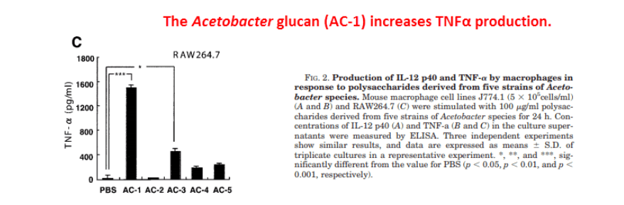 The Acetobacter glucan (AC-1) increases TNFα production.