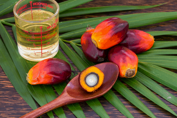Daily Medical Discoveries Image of Red Palm Fruit