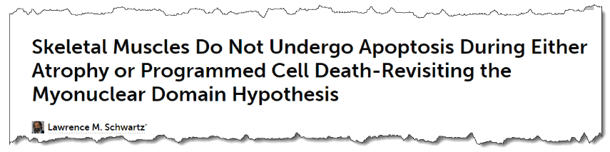 Skeletal Muscles Do Not Undergo Apoptosis During Either Atrophy or Programmed Cell Death-Revisiting the Myonuclear Domain Hypothesis